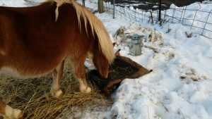 Photo of pony in snow with an augmented reality pop culture character